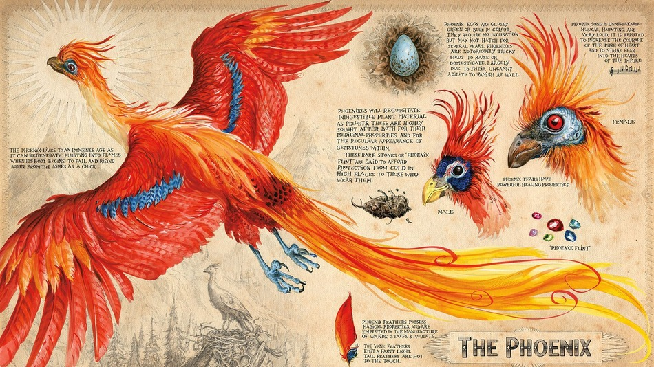 Phoenix_artwork_Harry_Potter_Chamber_of_Secrets